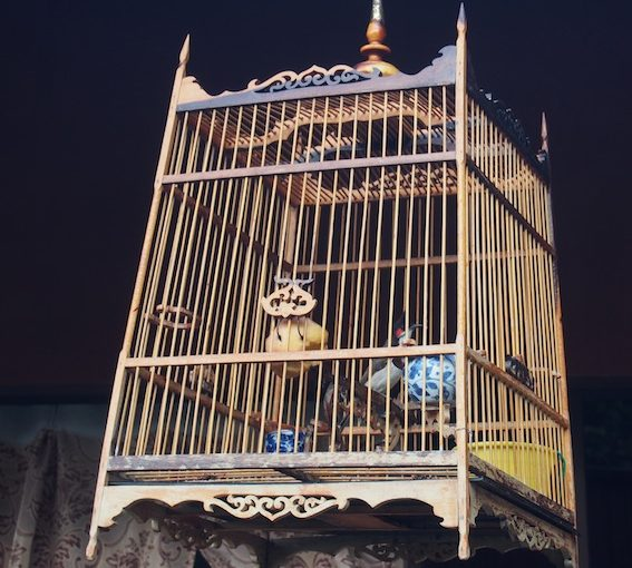 Bird Cage in the House, Birdinthehouse blog, birdhouse, Railroad Earth, Bird houses in Penang,